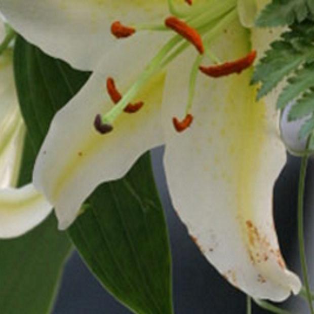 valentine flowers - featured