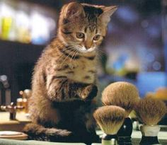 cat makeup brushes